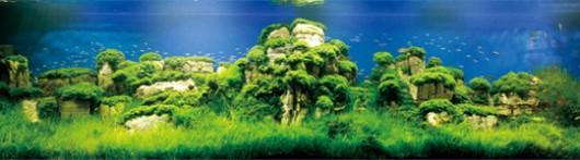 かっこいい水草水槽の世界