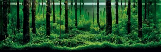2010年 第10回グランプリ  パベル・バウティーン(ロシア) タイトル:森の香り